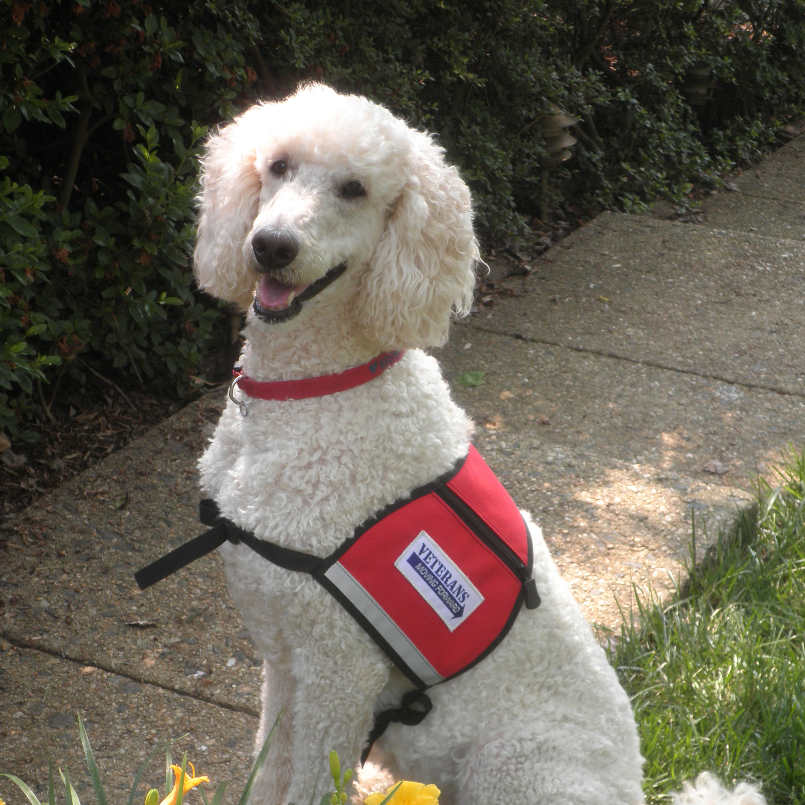 Training Therapy Dogs Career